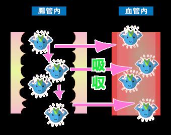 有効成分の吸収イメージ